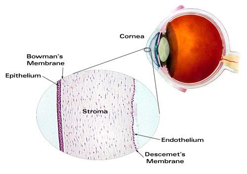 Major Ocular Structures Laramy K Independent Optical Lab Digital
